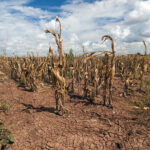 New Mexico EMNRD launches Climate Risk Map